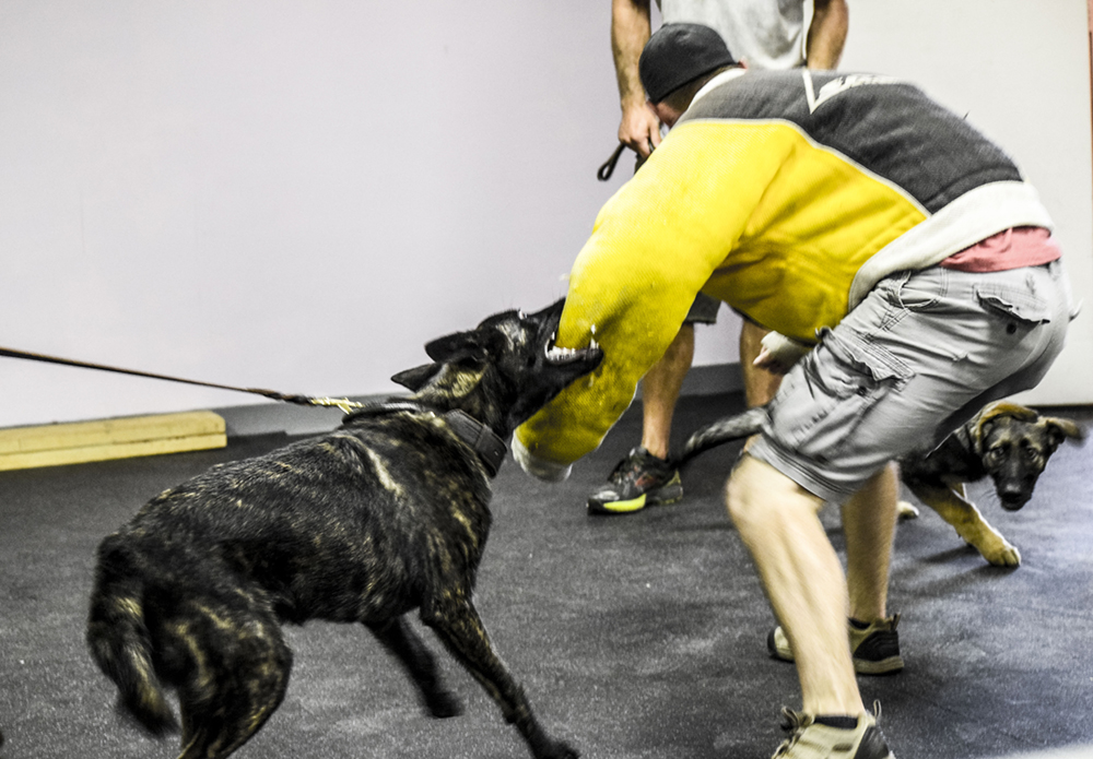 Personal-Protection-Dog-Training